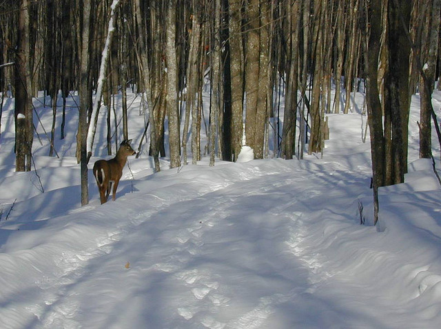 Porcupine Mountains Guided Snowshoe Hikes
